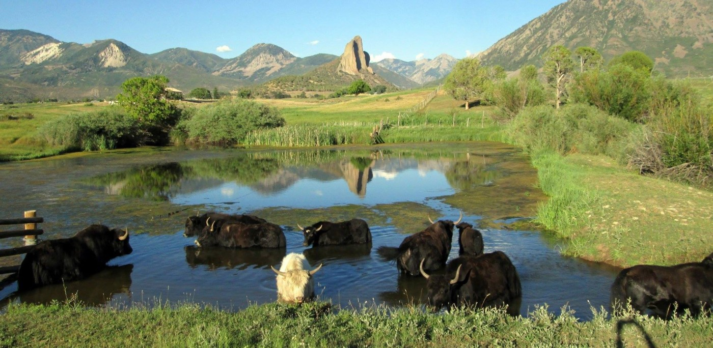 Butte Pasture Yak Ranch